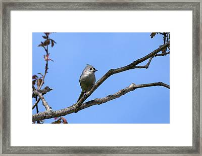 Weary Wings Framed Print by Christina Rollo
