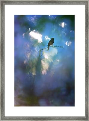 Weather To Fly  Framed Print