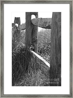 Weathered Framed Print by Barbara Bardzik
