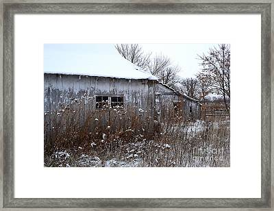 Weathered Barns In Winter Framed Print by Amy Lucid