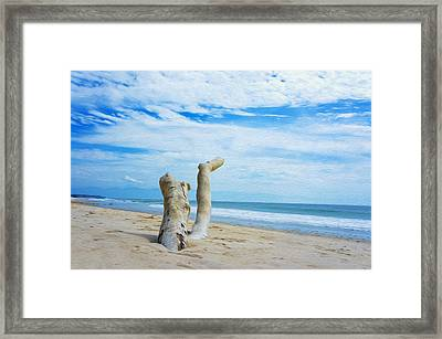 Weathered Driftwood Framed Print by Aged Pixel