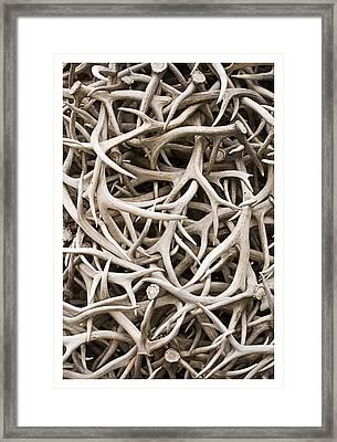 Weathered Elk Antlers Framed Print
