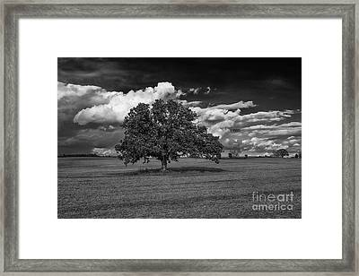 Weathered Oak Framed Print