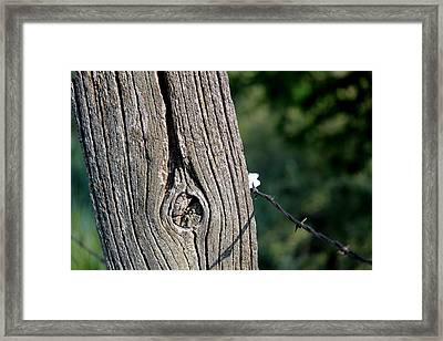 Weathered Post Framed Print