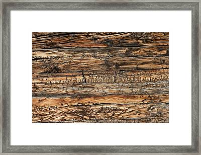 Weathered Wood 5 Framed Print by Charles Lupica