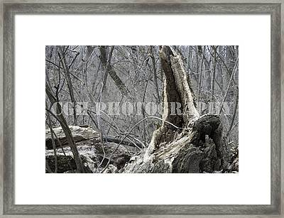 Weathered Wood Framed Print by Caralee White
