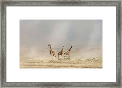 Weathering The Amboseli Dust Devils Framed Print