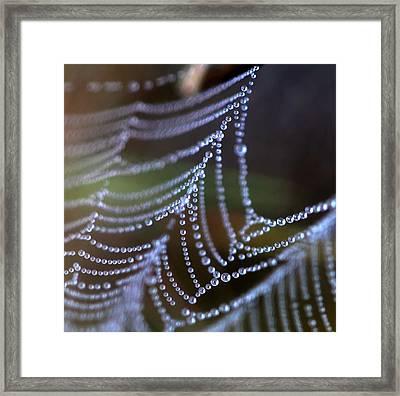Web 20131022-169 Framed Print by Carolyn Fletcher