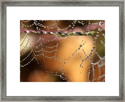 Web 20131022-252 Framed Print by Carolyn Fletcher