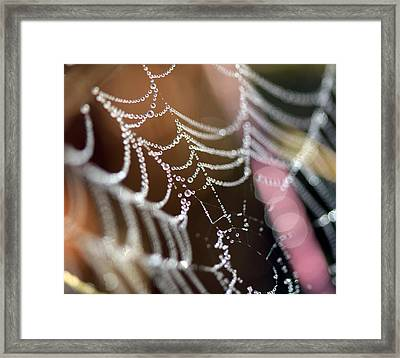 Web 20131022-64 Framed Print by Carolyn Fletcher