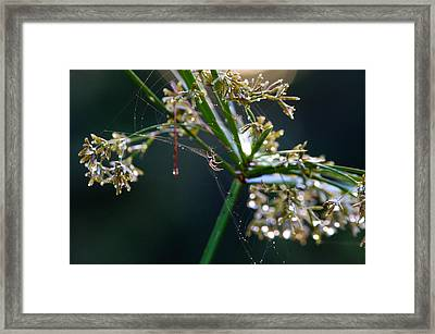 Framed Print featuring the photograph Web After The Rain by Adria Trail