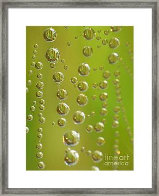 Web And Drops Framed Print by Odon Czintos