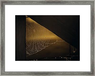 Web Framed Print by Chris Fletcher