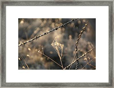 Framed Print featuring the photograph web by David S Reynolds