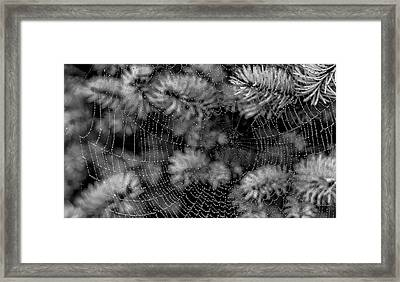 Web Drops Framed Print by Dennis Bucklin