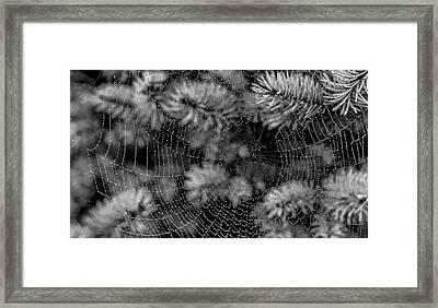 Web Drops Framed Print