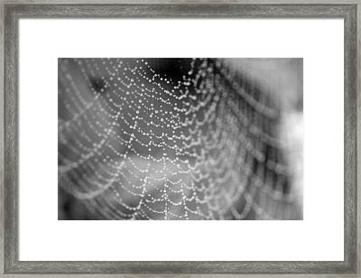 Web In The Rain Framed Print
