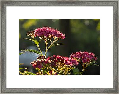 Framed Print featuring the photograph Web by Joe Winkler