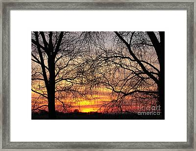 Web Of Branches Framed Print by David Warrington