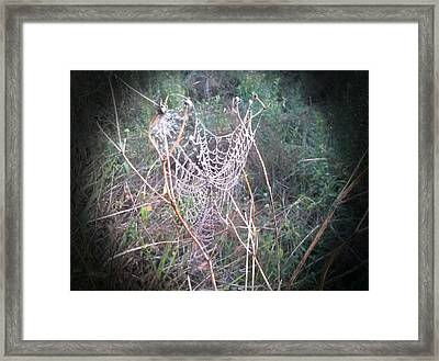 Web Of Dew Framed Print by Chasity Johnson