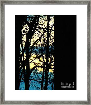 Web Framed Print by Sharon Costa