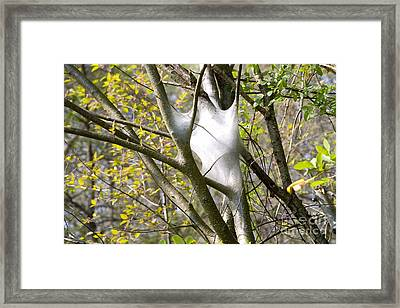Framed Print featuring the photograph Webbed Branches by Angelique Bowman