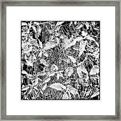 Webbed Framed Print by Roxy Hurtubise