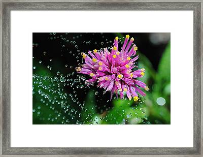 Webbed Water Droplets Framed Print by Kelly Nowak