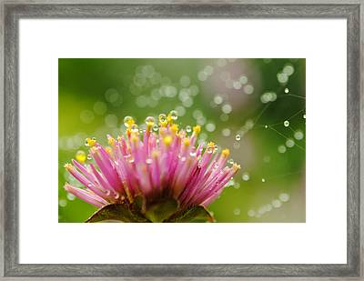Webs And Water Whimsy Framed Print by Kelly Nowak