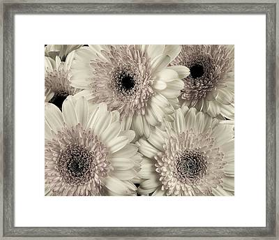 Wedding Bouquet -gerbera Duotone Framed Print