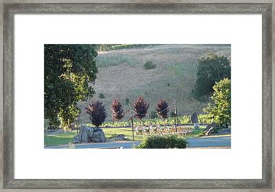 Wedding Grounds Framed Print by Shawn Marlow
