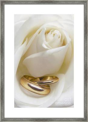 Wedding Rose Framed Print