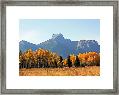 Wedge Mountain And Aspen Framed Print by Gerry Bates