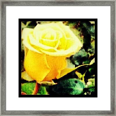 #wednesdays #theletterislove A #rose By Framed Print
