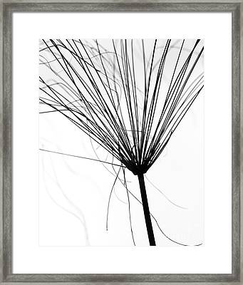 Weed By The Lake Framed Print by Sabrina L Ryan