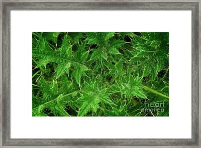 Weed Framed Print by Jolanta Meskauskiene
