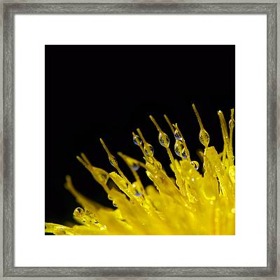 Weed Love Framed Print by Lisa Knechtel