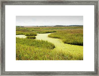 Weed On The Cley Bird Reserve Framed Print by Ashley Cooper
