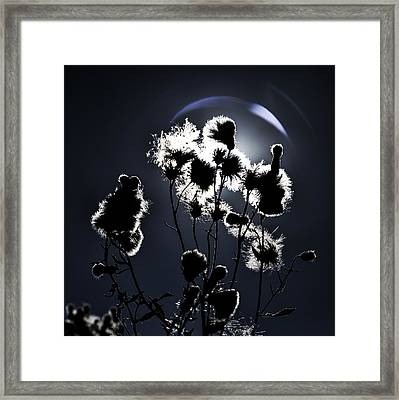 Weed Silhouette Framed Print
