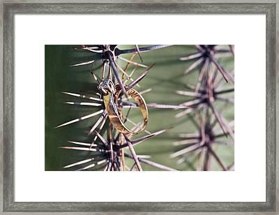 Weeding Ring On A Spine Framed Print by Douglas Barnett