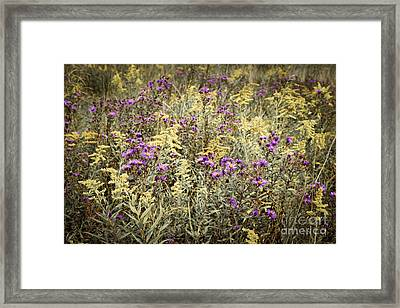 Weeds In Late Summer Framed Print