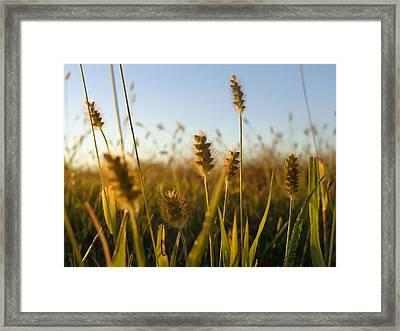 Framed Print featuring the photograph Weeds by Joseph Skompski