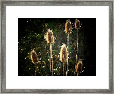 Weeds Framed Print by Michael L Kimble