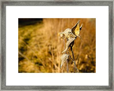 Weeds Vii Framed Print by Tim Fitzwater