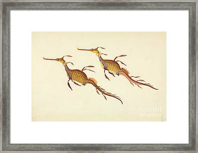 Weedy Seadragon, 19th Century Framed Print by Natural History Museum, London