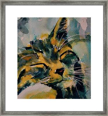 Weeeeeee Sleepee Framed Print by Paul Lovering