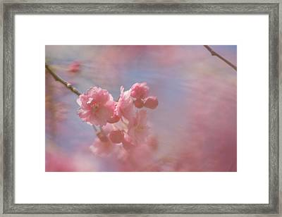 Weeping Cherry Blossoms Framed Print