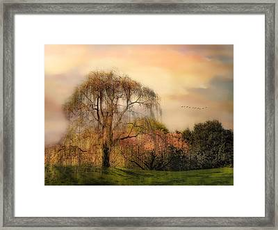 Weeping Cherry Tree Framed Print by Jessica Jenney
