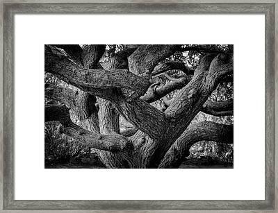 Weeping Hemlock Framed Print