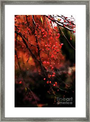 Framed Print featuring the photograph Weeping by Linda Shafer